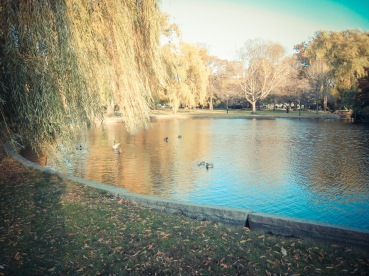 Boston_city_11