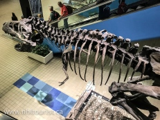 T-Rex skeleton at the airport entrance